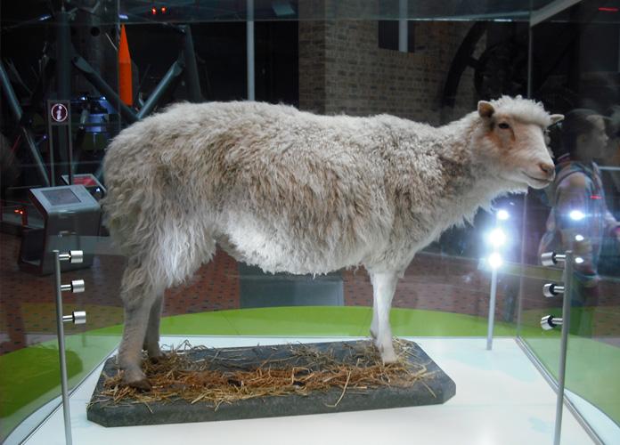 A famosa ovelha Dolly