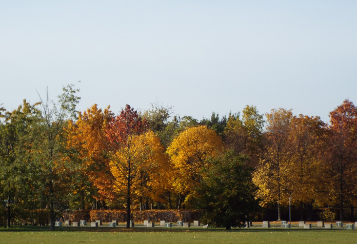 Olha a cor dessas árvores