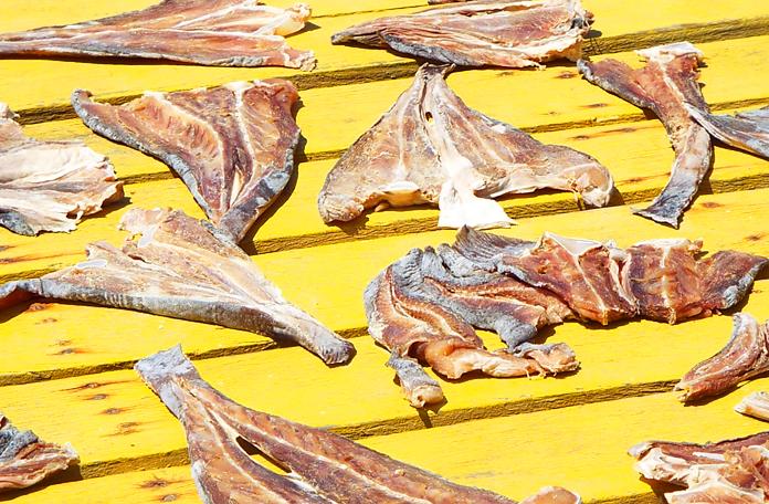 Peixe secando ao sol em Mandacaru