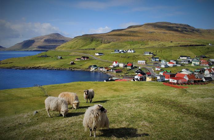 Ovelhas e casinhas