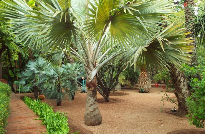 Plantas lindíssimas