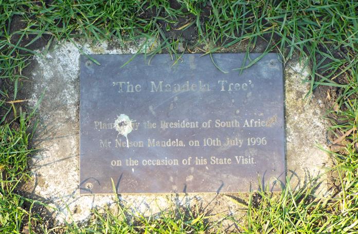 Plaquinha que identifica a árvore que foi plantada pelo Mandela