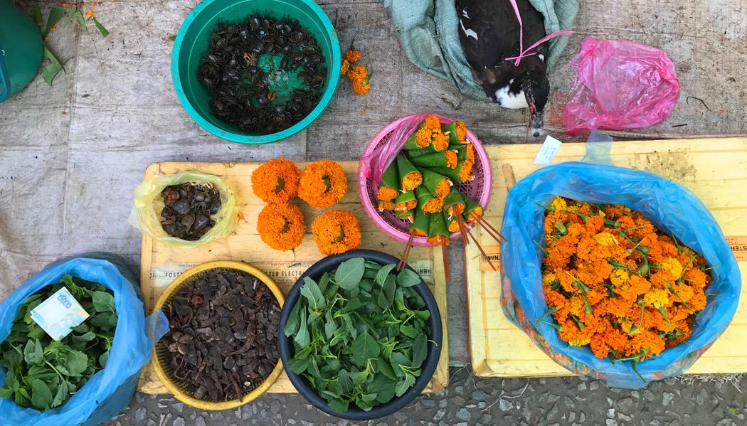 Comida viva: caranguejos e pato