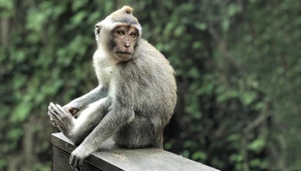 Floresta Sagrada dos Macacos