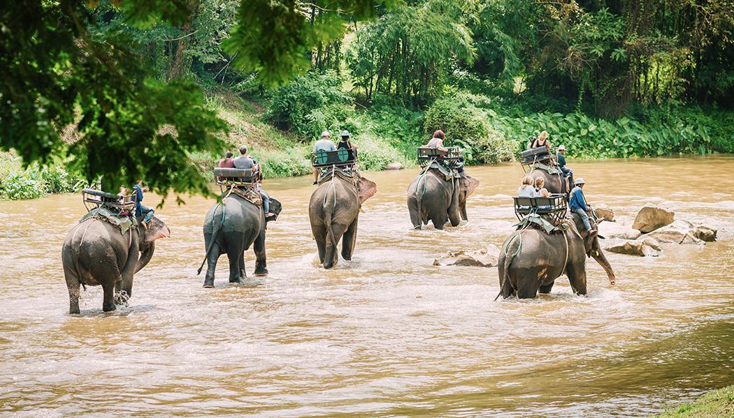 passeios em elefantes