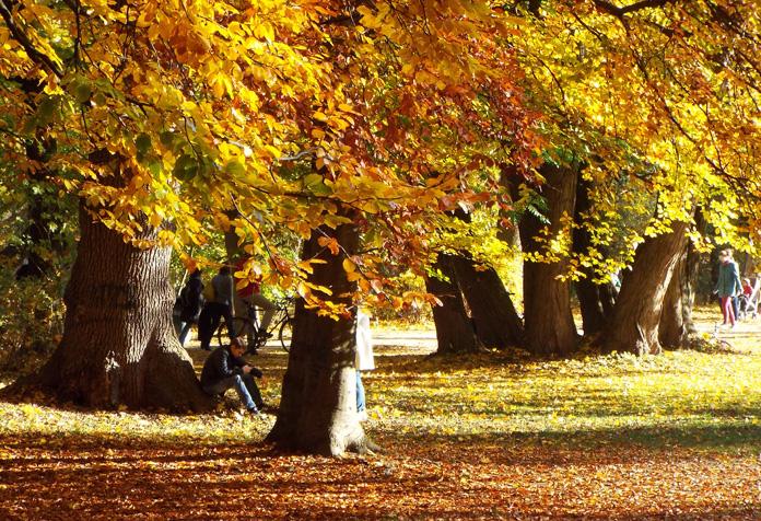 Cores do outono