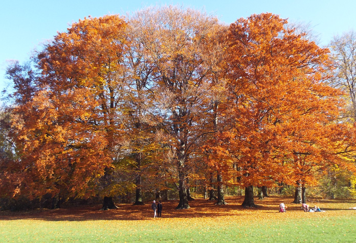 Cores do outono parte 2
