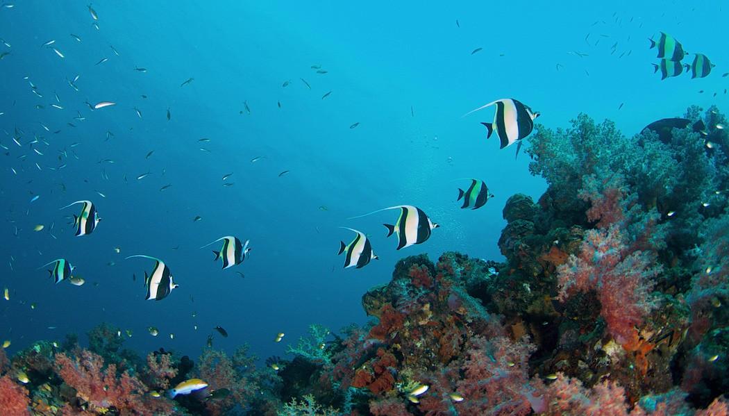 Mergulho em Phi Phi