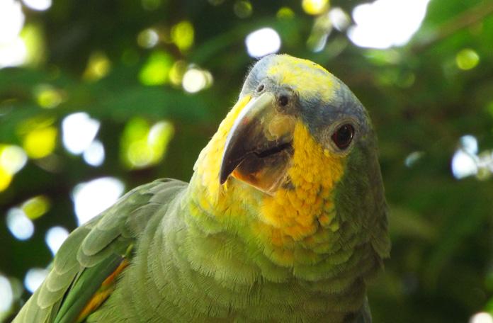 Papagaios do Sr.Ladir