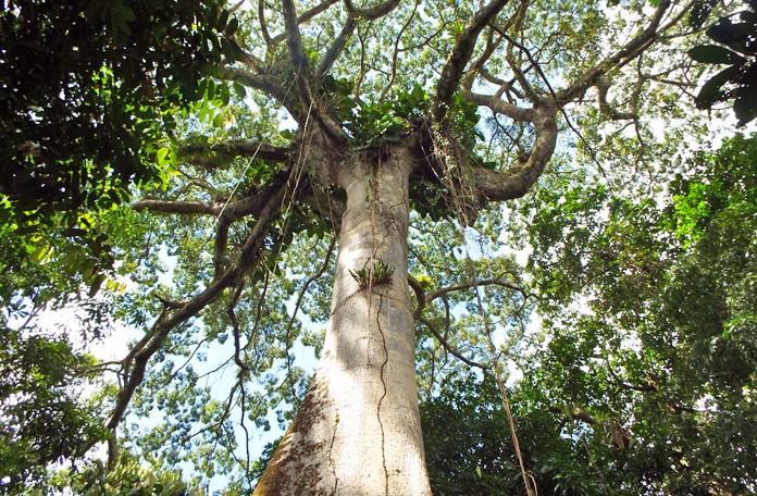 Árvores exuberantes