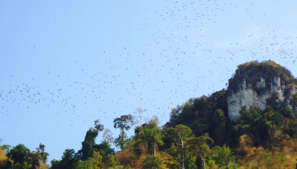 ilha dos morcegos