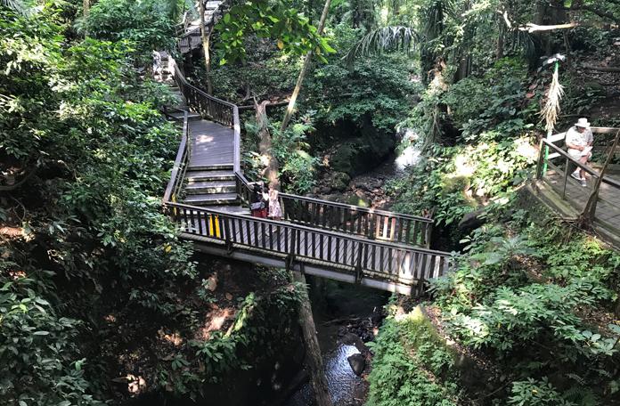 Trilhas, pontes e passarelas no meio da mata