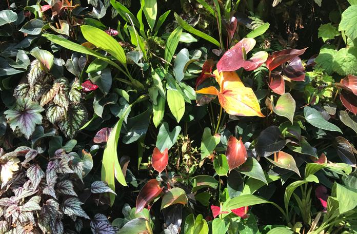 Plantas de todos os cantos do mundo