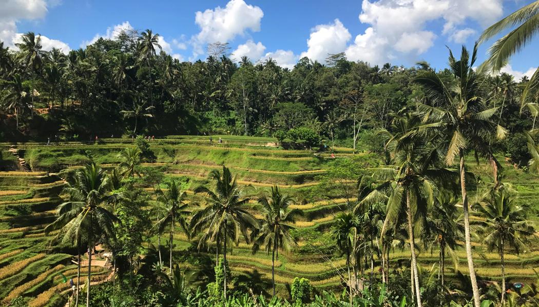 Terraço de arroz de Tegalalang