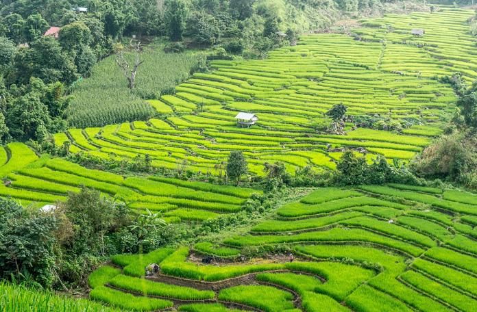 Onde se hospedar em Bali: Ubud