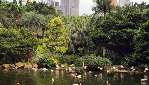 Parque Kowloon